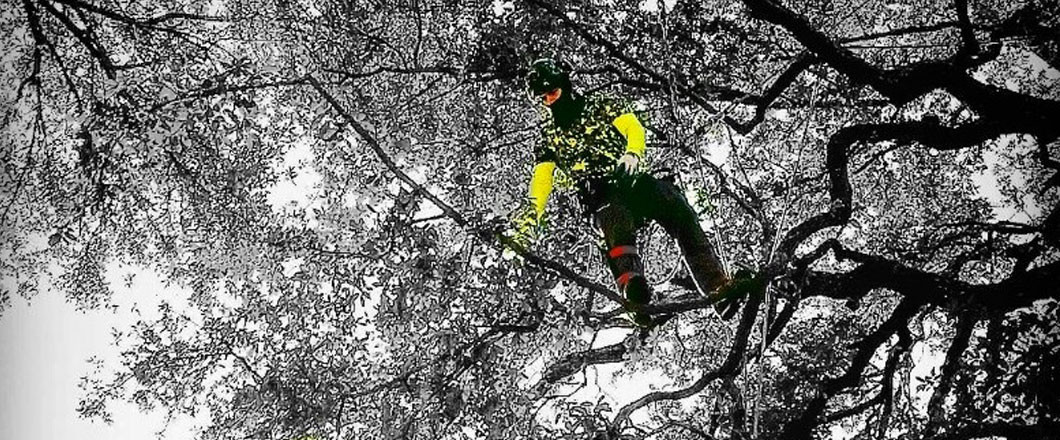 Reaching New Heights in the Tree Care Industry